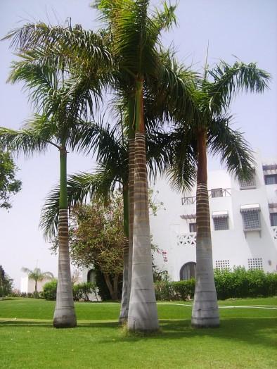 Отель Меркурий - поляна