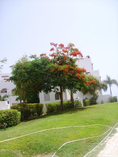 Меркурий - цветущее дерево