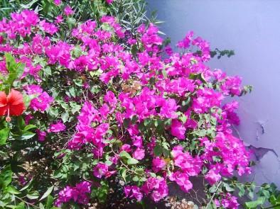 Цветы в Меркурии