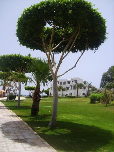 Меркурий - тороидальное дерево