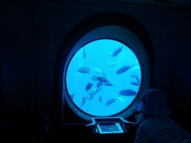 Рыбы в иллюминаторе