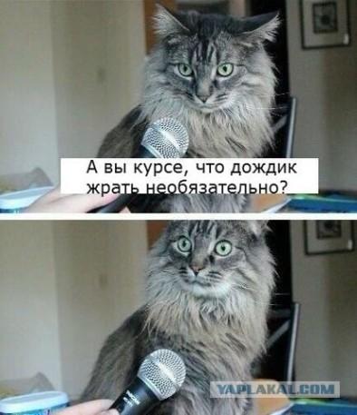 Интервью у котэ