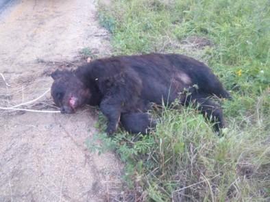 Сбитый медведь